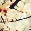 Spring-Flowers-HD-Wallpapers-in-HD