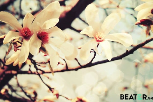 Spring-Flowers-HD-Wallpapers-in-HD