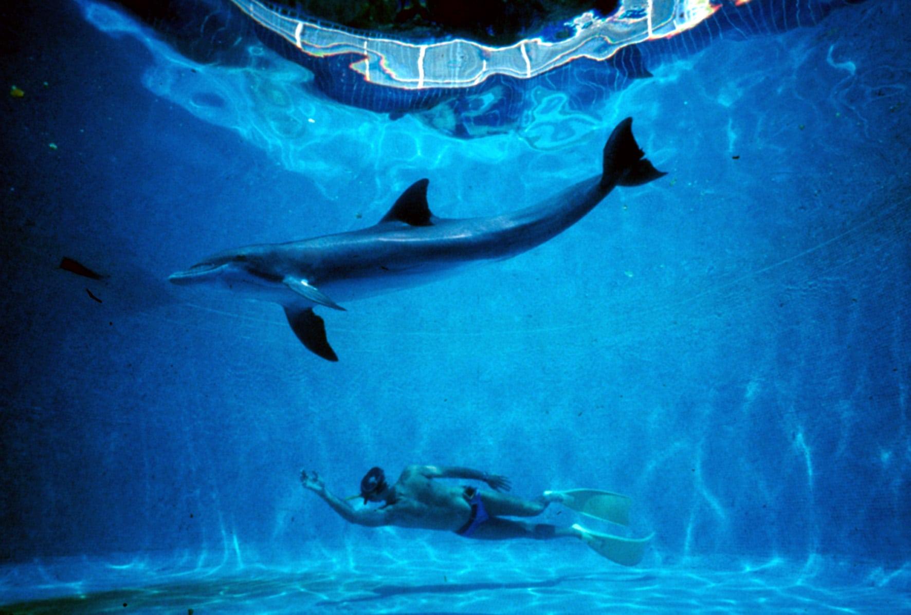 dolphin_man _