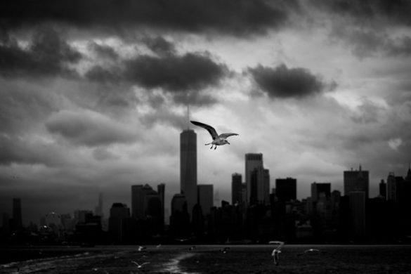 15 φωτογραφίες από το lockdown της Νέας Υόρκης.