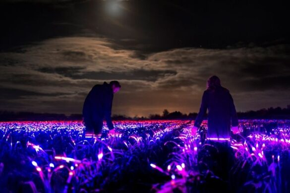 Grow: Ένα εντυπωσιακό installation για την ομορφιά της γεωργίας.