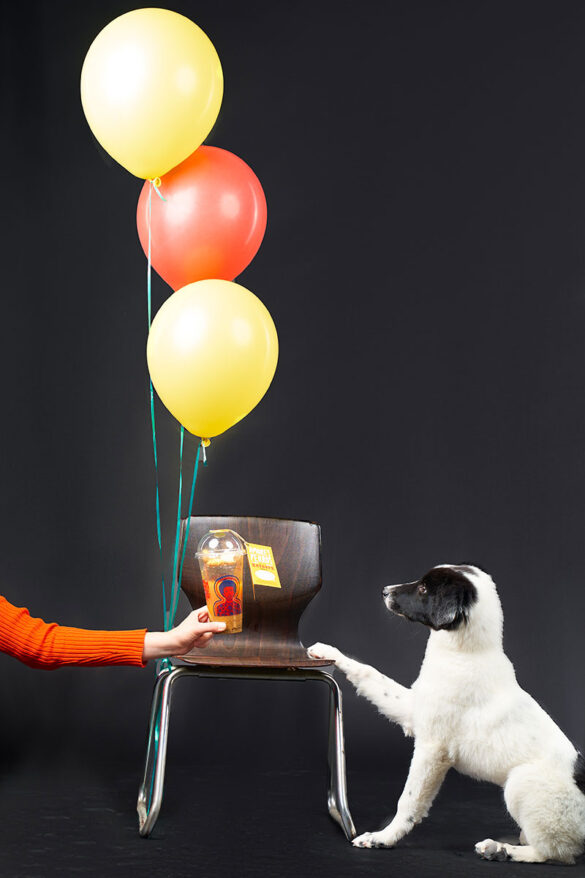 Εσύ, θα κεράσεις ένα cocktail τον σκύλο σου;